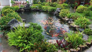 Tại sao chọn Cây xanh Nam Điền thiết kế thi công hồ Koi