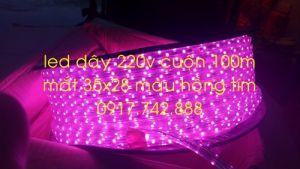 Led dây 35x28 220v màu hồng tím