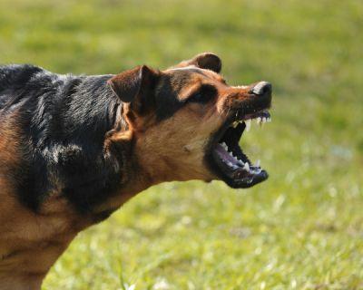 Sai lầm trong cách huấn luyện khiến chó trở nên hung dữ
