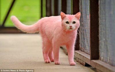 Nhuộm lông cho thú cưng có thực sự gây hại?