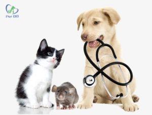 Vắc xin dại cho chó mèo