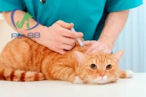 Vắc xin 4 bệnh cho mèo