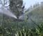 Kỹ thuật tưới phun mưa cho cây cà phê