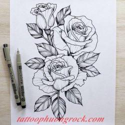 hinh xam hoa tia 18