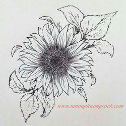 hinh xam hoa tia 9