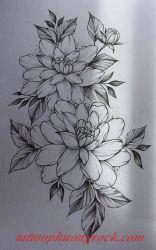 hinh xam hoa tia 12