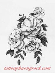 hinh xam hoa tia 14