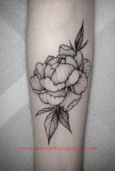 hinh xam hoa tia 32