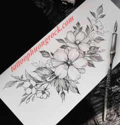 hinh xam hoa tia 34