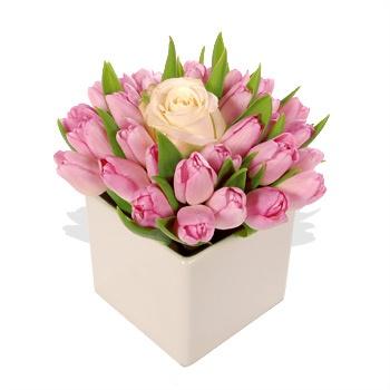 Hoa tuy lip hồng