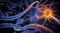 Tác động của việc luyện tập thường xuyên tới não bộ