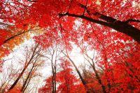 Sắc màu mùa thu tuyệt đẹp trên khắp Trung Quốc