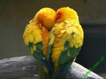 Hình ảnh 10 bộ tranh tình yêu treo phòng ngủ hạnh phúc