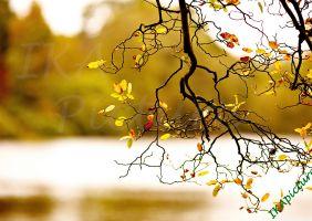 10 bức tranh trang trí phong cảnh đẹp mùa thu hà nội - P1