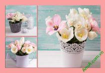 Tranh hoa treo phòng ngủ nhẹ nhàng AmiA 289