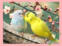 Tranh 2 con chim treo phòng ngủ vợ chồng AmiA 351
