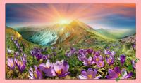 Tranh phong cảnh có khổ cỡ lớn Đồi hoa nắng AmiA 343
