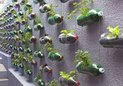Vườn rau từ hàng trăm chai nước