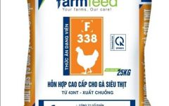 Thức ăn hỗn hợp cao cấp cho gà trắng siêu thịt từ 43nt- xuất