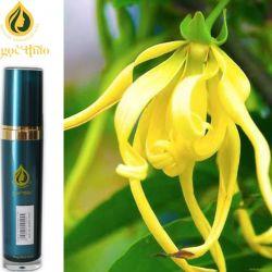 Hoa Ngọc Lan Tây - Ylang-Ylang Oil