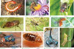 Tranh côn trùng PA5427