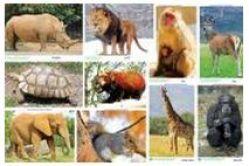 Tranh động vật ( ĐV hoang dã ) PA5428