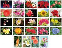 Tranh các loại hoa PA5429