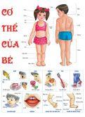 Tranh cơ thể bé PA5424