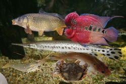 Tranh động vật ( ĐV nước ngọt ) PA5402