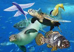 Tranh động vật biển PA5422