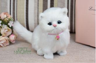 Mô Hình Mèo Trắng Ngồi WY325