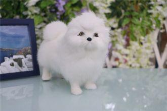 Mô hình chó Chow Chow Nhỏ 01