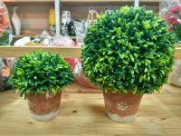 Chậu cây xanh ( nhiều size )