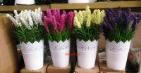 Chậu hoa ren ( nhiều màu)