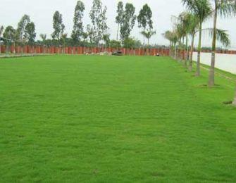 Trang trí sân vườn bằng cỏ Nhung Nhật, cần chú ý vấn đề gì?