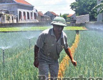 Hệ thống tưới nước tự động cho hành hoa, cải ngọt ở Nghệ An