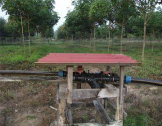 Hệ thống tưới nhỏ giọt cho cây cao su