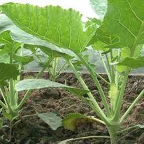 HD bà con nông dân kỹ thuật làm vòm che nilong trồng rau