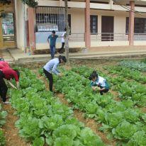Hướng dẫn các em học sinh kỹ thuật ươm hạt giống trong khay