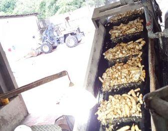 Nutritional value of cassava