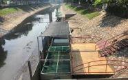 Cá Koi Nhật chết ở sông Tô Lịch: Mời chuyên gia thủy sản vào cuộc