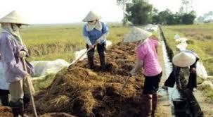 Xử lý rơm rạ chất thải chăn nuôi ở Văn Yên Yên Bái