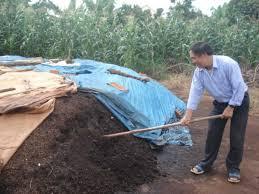 Xử lý vỏ cà phê làm phân Compost
