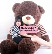 Teddy cực Đại 2m3