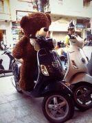Gấu Teddy nơ CK 1m5
