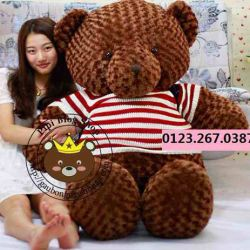 Gấu bông bự teddy co my socola (1m4, 1m8)