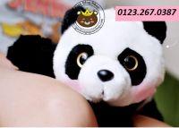 Gấu bông Panda bò lông dày cao cấp