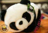 Gấu bông panda lông dày cao cấp