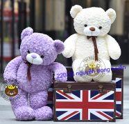 Gấu bông teddy lông xoắn trắng / tím (80cm, 1m2, 1m4)