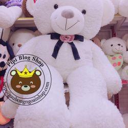 Gấu bông teddy Kiss nơ Chanel (1m7)